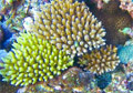 coral_reefs_and_climate_change link thumbnail