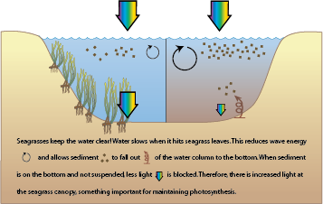 Seagrass Flow Diagram